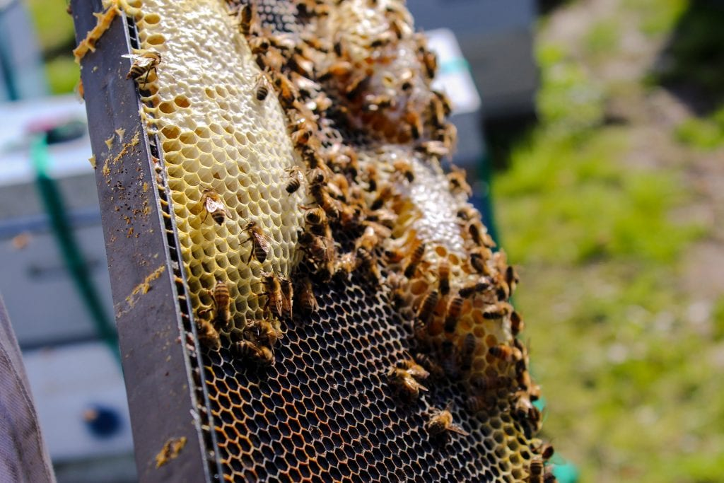 Bee-trayal: 'Emergency' Authorisation Of Neonicotinoid Thiamethoxam Bad News For Bees