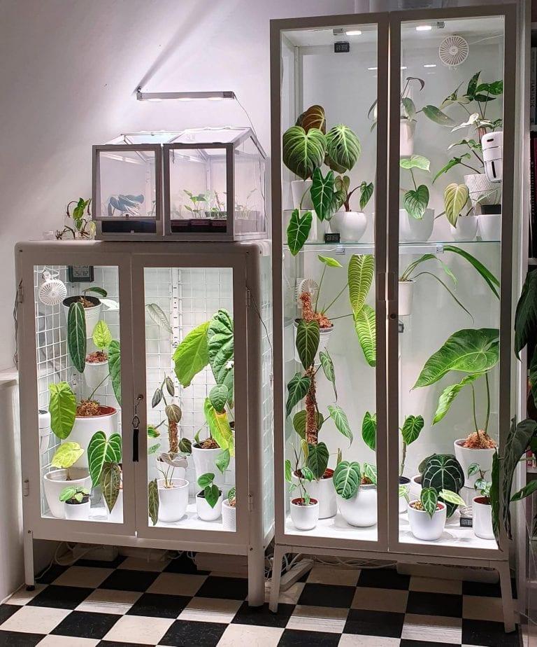 DIY Indoor Greenhouse: Keep Houseplants Thriving