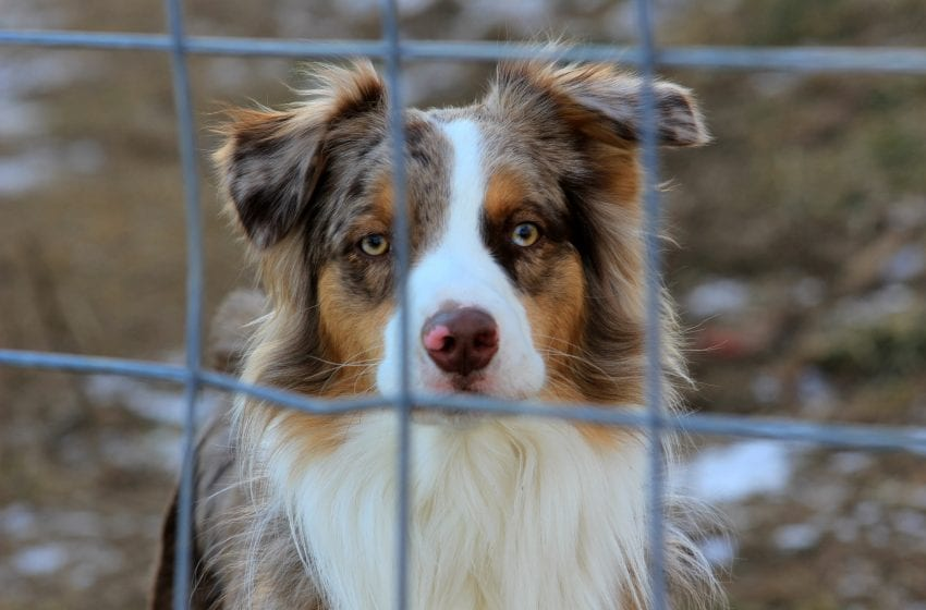 Lockdown Puppies: Stop Buying from Breeders
